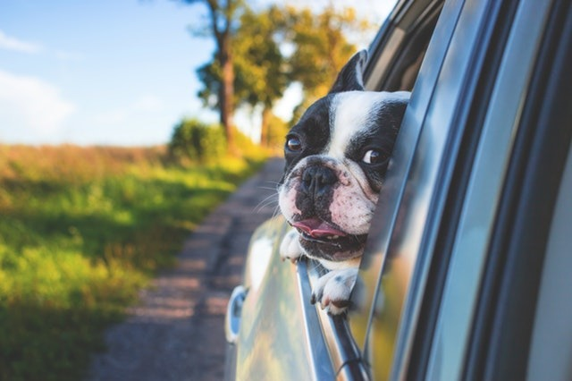 day trips with dogs in cars